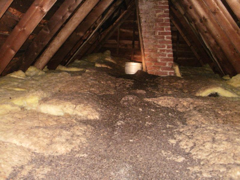 Animal Evictions Llc 174 Professional Attic Cleaning Of