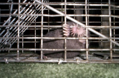 Animal Evictions Llc 174 Mole Control